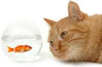 Katze und Fisch Magazin